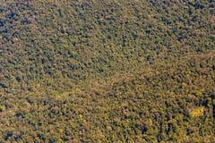 背景从上面森林视图,绿色自然纹理 库存图片