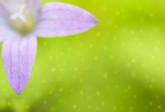 背景会开蓝色钟形花的草绿灯斑点 库存照片