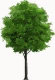 背景例证图象查出的结构树向量白色 库存例证