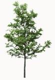 背景例证图象查出的结构树向量白色 向量例证