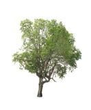 背景例证图象查出的结构树向量白色 库存图片