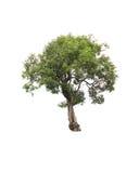 背景例证图象查出的结构树向量白色 库存照片