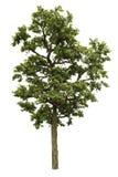 背景例证图象查出的结构树向量白色 免版税库存图片