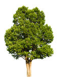 背景例证图象查出的结构树向量白色 免版税图库摄影
