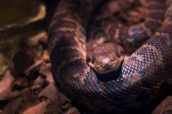 背景例证毒蛇白色 库存照片