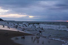 背景例证风暴日落向量 库存图片