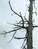 背景停止的阴暗木头 免版税图库摄影