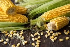 背景健康被收获的玉米 免版税库存图片