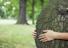 背景关心概念环境查出小的作为结构树白色 免版税库存图片