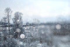 背景冬天森林 库存照片