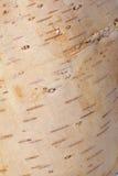 背景几何老装饰品纸张葡萄酒 免版税库存图片