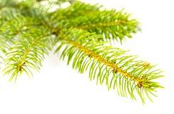 背景分行圣诞节装饰冷杉查出结构树白色 库存图片