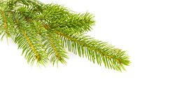 背景分行圣诞节装饰冷杉查出结构树白色 免版税库存图片
