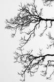 背景分行结构树 免版税图库摄影