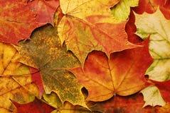 背景划分为的叶子 免版税库存照片