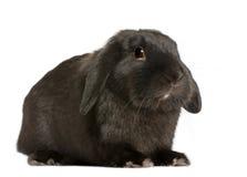 背景前面砍兔子白色 免版税库存图片