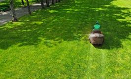 背景剪报查出的割草机路径白色 花匠在公园草坪剪草 割草机 免版税库存图片