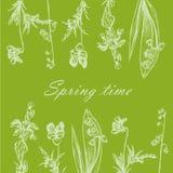 背景卡片剪影手拉的森林草和花 向量例证