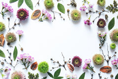 背景另外花卉四个框架集合白色 库存照片