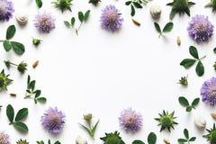 背景另外花卉四个框架集合白色 图库摄影