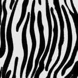 背景可能仿造皮肤使用的斑马 库存图片