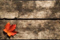 背景叶子槭树红色 库存照片