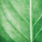 背景叶子油漆模式 免版税库存图片