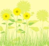 背景向日葵向量 库存照片
