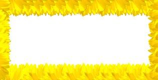 背景向日葵空白黄色 库存照片