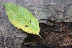 背景吠声叶子绿色 图库摄影