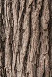 背景吠声纹理结构树 库存图片