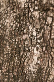 背景吠声纹理结构树 库存照片