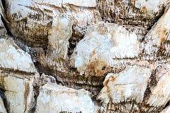 背景吠声能使用的结构树 库存图片