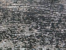 背景吠声能使用的结构树 免版税图库摄影