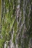 背景吠声能使用的结构树 免版税库存照片