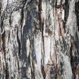 背景咆哮黑暗的纹理结构树 免版税库存照片