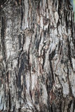 背景咆哮黑暗的纹理结构树 库存照片