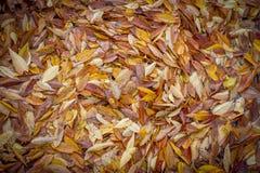 背景和纹理的叶子 免版税库存照片