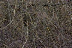 背景和纹理 干燥工厂 一个防风林 库存图片