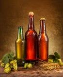 背景啤酒瓶上色柔和的橙色被拍摄的工作室黄色 图库摄影