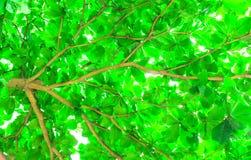 背景图象的树叶子 库存照片