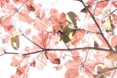 背景图象的红色叶子 免版税图库摄影