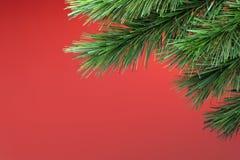 背景圣诞树 免版税图库摄影