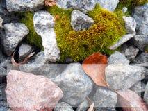 背景在红色和灰色石头的纹理青苔与框架 库存照片