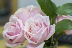 背景在花花束的三桃红色和白玫瑰  免版税图库摄影