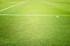 背景域橄榄球草绿色纹理 库存图片