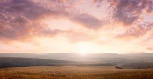 背景域草横向天空 免版税库存图片