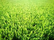 背景域草绿色足球 库存图片