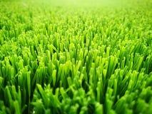 背景域草绿色足球 免版税图库摄影