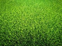 背景域草绿色足球 图库摄影